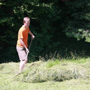 16.7.2007  11:49, autor: Teoretik / Aj hrabanie trávy bolo na dennom poriadku