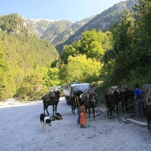 24.8.2007  16:00, autor: Teoretik / Kone mali na starosti zásobovanie horskej chaty, ktorá bola o 1000 m vyššie