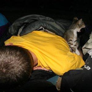 27.8.2007  5:56, autor: Teoretik / V kempe pri Kalambake sa zobúdzame spolu s miestnym mačiatkom