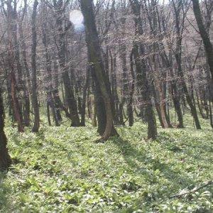 29.3.2008  13:20, autor: Cebig / lesík