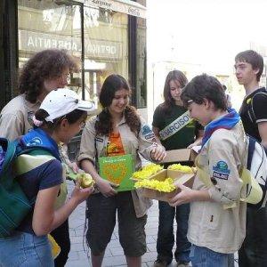 Deň narcisov 2008 (11.4.2008)