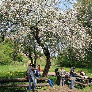 2.5.2008  10:00, autor: Teoretik / Ráno pod rozkvitnutou jabloňou