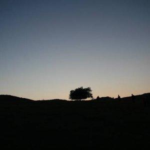 4.7.2008  21:08, autor: Teoretik / Ku kúzelnému stromu