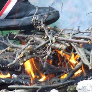 11.10.2008  14:34, autor: Johny / Opekanie topánok