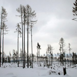19.2.2009  14:25, autor: Teoretik / Krajina pôsobila miestami ozaj bezútešne