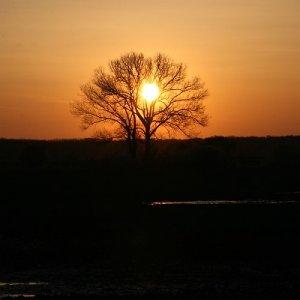 10.4.2009  19:16, autor: Teoretik / Trocha krásy na pekný večer