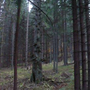 30.10.2009  16:23, autor: Amigo / ...veď sme len kúsok od Dobročského pralesa.