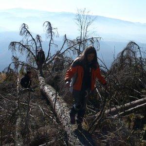 31.10.2009  13:12, autor: Amigo / Ešte že ten strom spravil most...