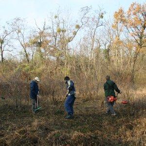 14.11.2009  10:10, autor: Zuzka / Pustili sme sa hneď do práce