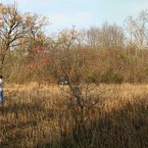Brigáda v prírodnej rezervácii Gajc (14.11.2009)