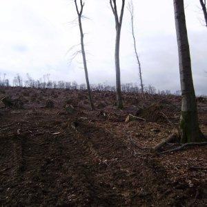 16.1.2011 0:00, autor: Aďo / Po lesoch nad Pezinkom ostala len spomienka