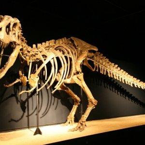 19.8.2011 13:39 / V prírodovednom múzeu v Barcelone