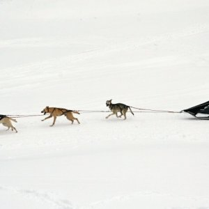 19.2.2012 11:56, autor: Teoretik / Preteky psích záprahov