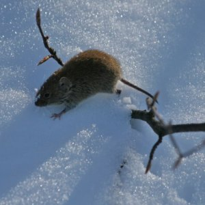 22.2.2012 12:13, autor: Teoretik / Proste myška