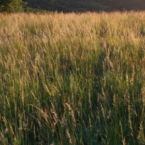 1.6.2012 20:17, autor: Teoretik / Hneď na prvom kopci nás privítala krása