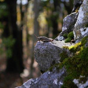 Trojdňovka na Ostrý kameň (17.-19.10.2014)