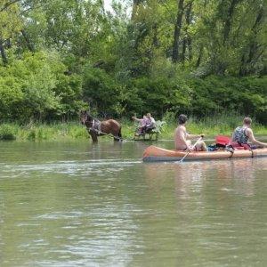 9.5.2015 13:23, autor: Teoretik / Pozor, nezrazte vodného koňa!