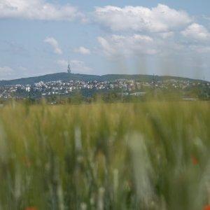 ' 1111847' / Autor: Škrečok / Dátum: 13.6.2020