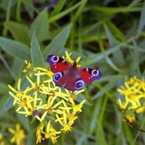 Farba krídel