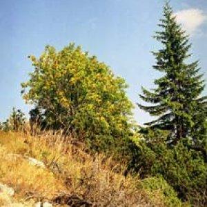 V Nízkych Tatrách to už hrá jesennými farbami