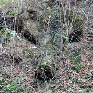 Cestou na Kačín môžete stretnúť tohto vlka!