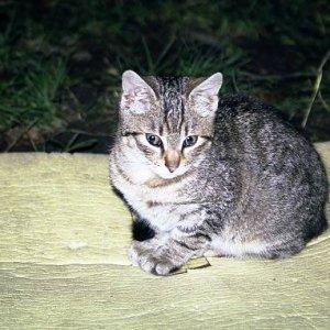 6.2.2005  22:49 / Mačka, ktorej sa naše karimatky veľmi páčili. A spacáky ešte viac...