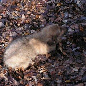 3.12.2005  12:41 / Icik - psík, ktorého sme zachránili